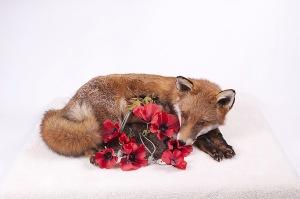 foxinthesnow06lr-w940